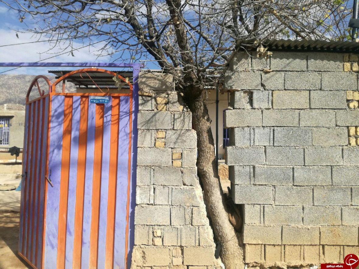 شهروندخبرنگار نورآباد ممسنی؛ اقدام جالب یک پیرمرد برای حفظ درخت در حیاط خانه اش