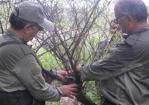 مشاهده سرگین و رد پای گوزن زرد ایرانی در پارک ملی دز