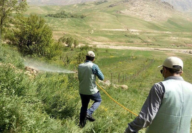 خبرنگاران مبارزه با ملخ صحرایی در سیستان و بلوچستان به حدود 54 هزار هکتار رسید
