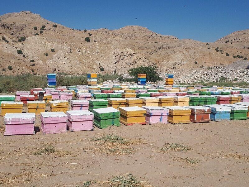خبرنگاران برداشت عسل کنار از زنبورستان های لالی آغاز شد